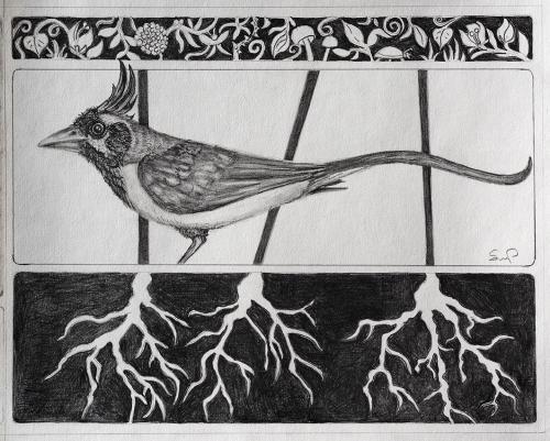 Aviary Nouveau series